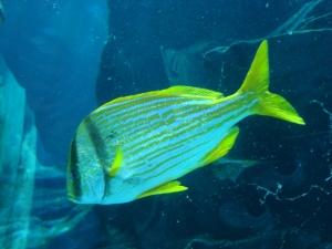 Mugs\' Favorite Fish