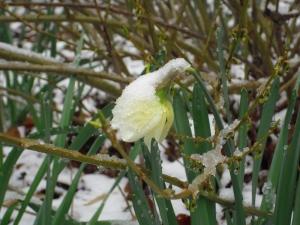 h.snow_
