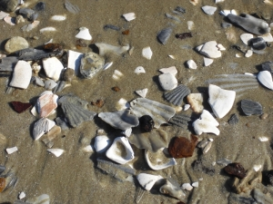 c.shells