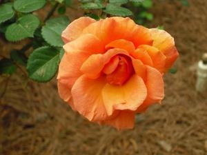 h.orange