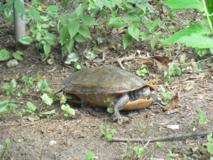 a.turtle