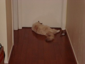Patches guarding Gabe's door